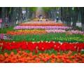 Тур в Кропивницкий на тюльпаны 25.04, 01.05